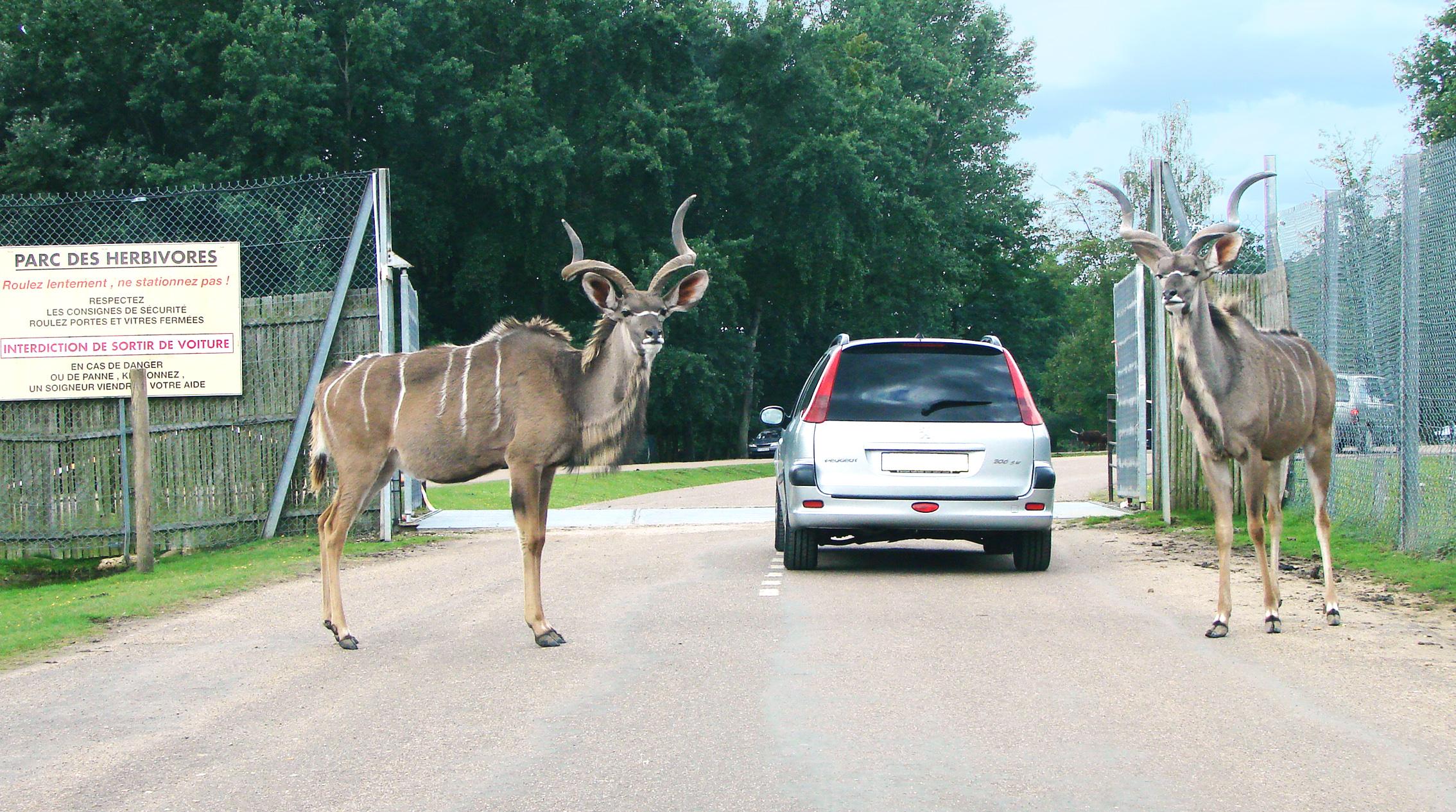 Les activit s for Zoo en yvelines